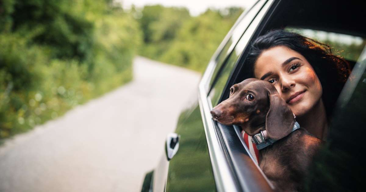 'Uber Pet' will let drivers know your furry friend is coming too